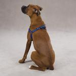 View Image 3 of Reflective Cushion Dog Harness by Zack & Zoey - Blue