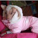 View Image 5 of Ruffin It Snowsuit - Pink