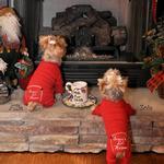 View Image 1 of Santa's Lil Helper Dog Pajamas