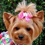 View Image 1 of Satin Handmade Dog Bow - Fuchsia
