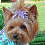 View Image 1 of Satin Handmade Dog Bow - Lavender