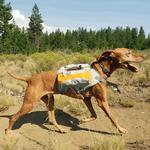 View Image 1 of Singletrak Hydration Dog Pack by RuffWear - Orange Sunset