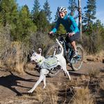 View Image 1 of Singletrak Hydration Dog Pack by RuffWear - Cloudburst Gray