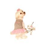 View Image 1 of Sugar & Spice Design Dog Dress - Sugar