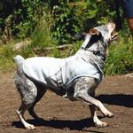 View Image 2 of Swamp Cooler Dog Cooling Vest by RuffWear - Ice Blue