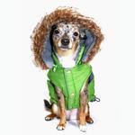View Image 2 of Swiss Alpine Ski Dog Vest by Hip Doggie - Green