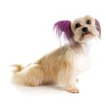 View Image 1 of Top Performance Dog Hair Dye Gels