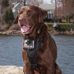 View Image 1 of Tru-Fit Dog Harness with Camera Mount by Kurgo