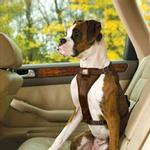 View Image 1 of Tru-Fit Smart Dog Harness by Kurgo - Brown