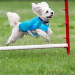 View Image 2 of Ultimate Cooling Dog Coat by Canine Equipment