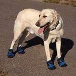 View Image 3 of Ultra Paws Cool Dog Boots - Blue