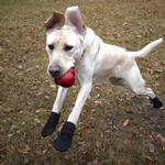 View Image 5 of Ultra Paws Rugged Dog Boots - Black