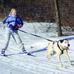 View Image 2 of Ultra Paws Skijor Hip Belt Hands Free Dog Leash