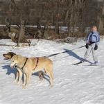 View Image 2 of Ultra Paws Two Dog Tow Leash