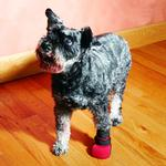 View Image 8 of Ultra Paws Wound Boot - Red