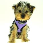 View Image 2 of Ultra USA Choke Free Dog Harness by Doggie Design - Purple Lavender