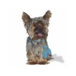 View Image 2 of Urban Stripe Dog Scarf by Dogo - Blue