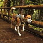 View Image 3 of Web Master Dog Harness by RuffWear - Twilight Gray