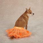 View Image 2 of Pumpkin Dog Skirt Set