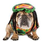View Image 1 of Zelda 70's Rasta Halloween Dog Costume