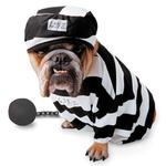 View Image 1 of Zelda Prisoner Halloween Dog Costume