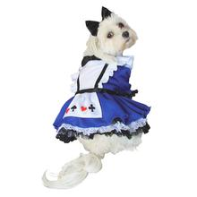 Alice in Wonderland Halloween Dog Costume