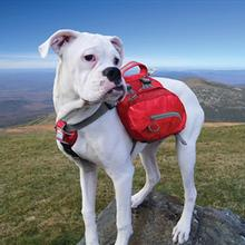 Baxter Dog Backpack by Kurgo - Barn Red