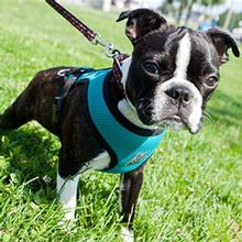 Cirque Dog Harness - Teal Air Mesh