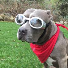 Doggles - ILS Silver Frame with Clear Lens