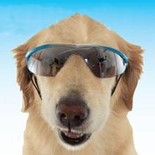 Doggles - K9 Optix Rubber Sunglasses for Dogs - Blue Gradient with Smoke Lenses