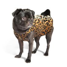 Gold Paw Fleece Dog Jacket - Leopard