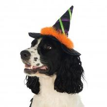 Halloween Witch Dog Hat with Trim