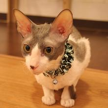 Houndstooth Cat Collar by Catspia - Aqua