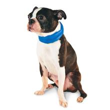 iCool Dog Scarf by Dogo - Blue