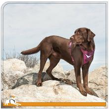 Kurgo Go-Tech Adventure Dog Harness - Raspberry