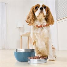 Kurgo Wander Pail Travel Dog Water Bowl