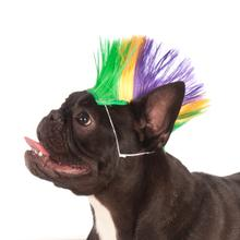 Mohawk Dog Wig - Mardi Gras