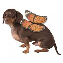 Monarch Butterfly Wings Dog Costume