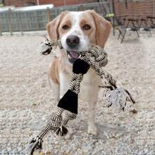 Mrs. Roper Dog Toy