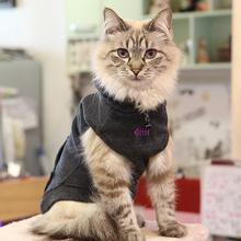 Nemo Cat Hoodie by Catspia - Dark Gray