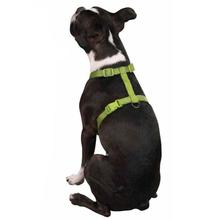 Nylon Harness by Zack & Zoey - Parrot Green