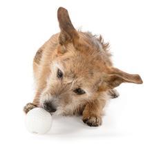 Orbee-Tuff Golf Ball Dog Toy