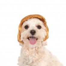 Pawlitical Billionaire Wig Dog Costume
