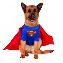 Superman Dog Halloween Costume - Big Dog Edition