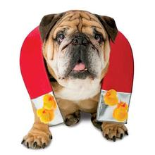 Zelda Chick Magnet Halloween Dog Costume