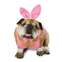 Zelda Hunny Bunny Halloween Dog Costume