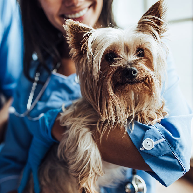 your-pets-heartworms-what-you-need-to-know