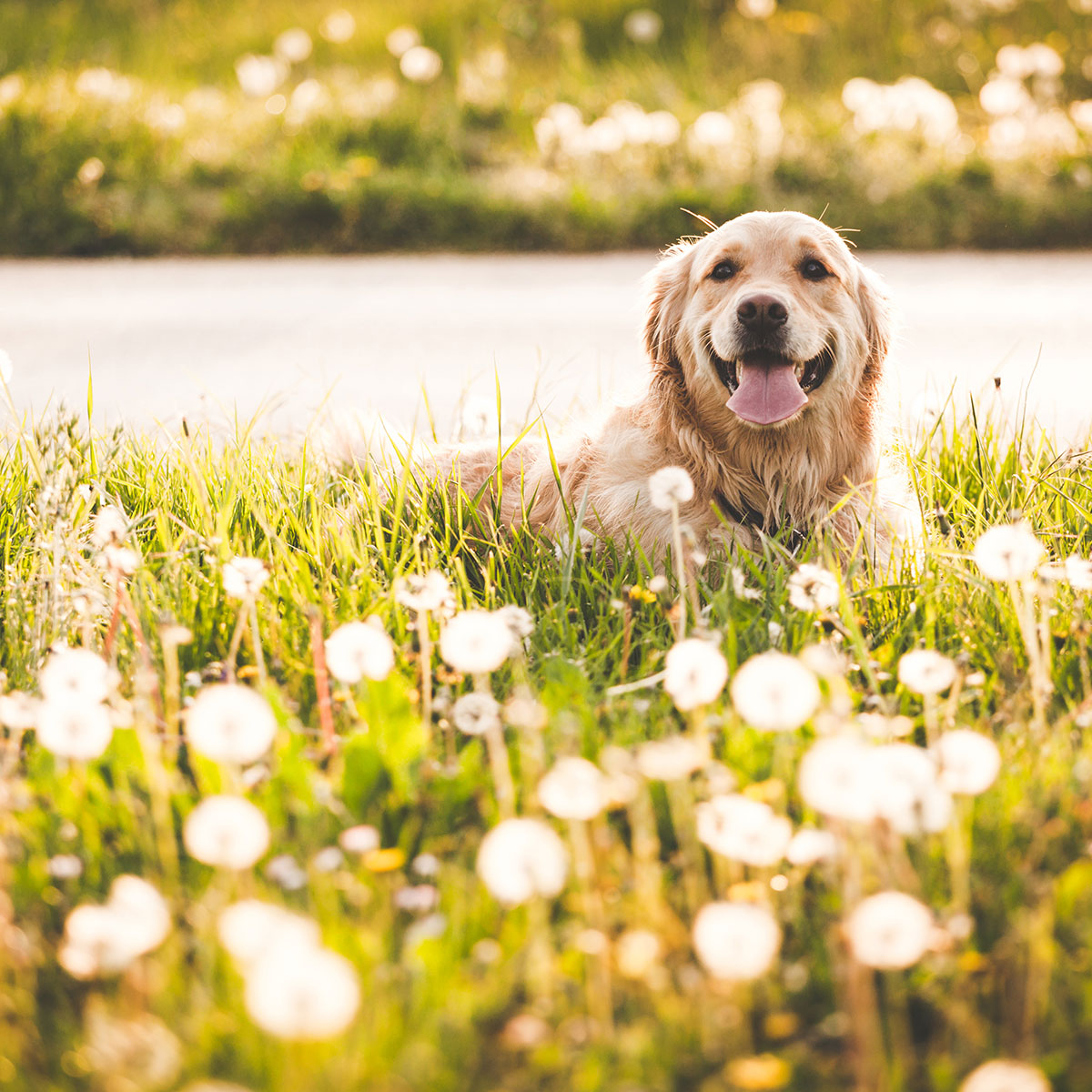 keeping-your-dog-healthy-this-spring