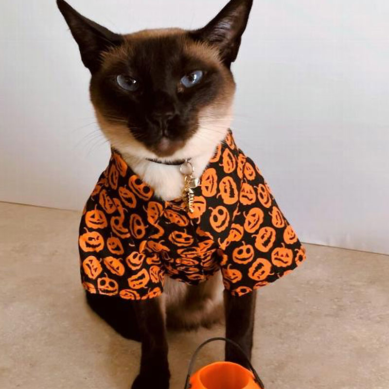 Cats and Halloween Costumes