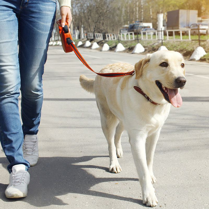 why-its-best-to-keep-your-dog-onleash